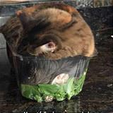 fell asleep in a salad