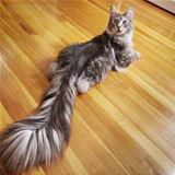 huge fluffy tail