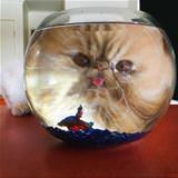 i wants dis fishy