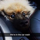 in the wash