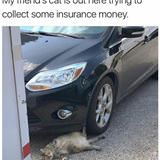 insurance fraud cat