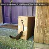 ordered squirrel food from amazon