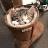 the boot cat