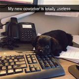 useless co worker