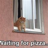 waiting for pizza
