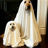We Are Ghosts Lol
