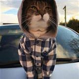 i am farmer cat