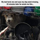 the dog went missing