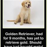 yet to retrieve gold