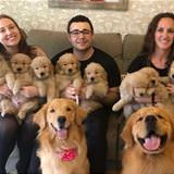 A Huge Dog Family