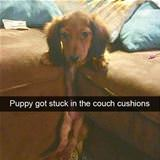 got stuck in the couch