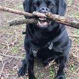 Got Your Stick