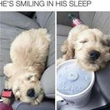 smiling in his sleep