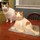 a cake of my cat