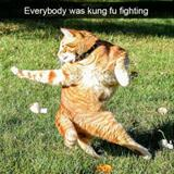 everyone was kung fu