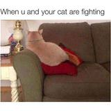 fighting with the cat