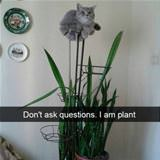 i am a plant now