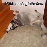 is the dog broken