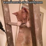 this cat is not much of a handyman