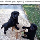 very important business meeting
