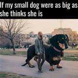 how big my dog thinks she is