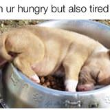 hungry and tired