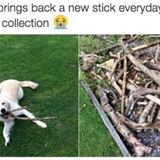 i have a collection of sticks