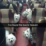the bus to heaven
