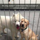 the concept of personal space