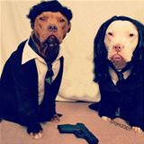 the pulp fiction dogs