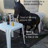 tired of horsing around