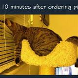 when ordering a pizza