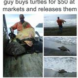 buying some turtles
