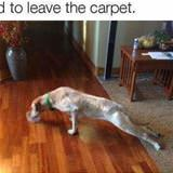 I Do Not Want To Leave The Carpet