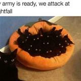 my army is ready for attack