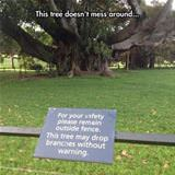 this tree does not mess around