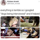 dogs being interviewed