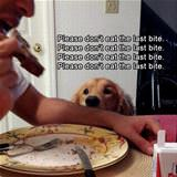 last bite please