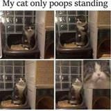 my cat poops standing