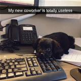 my new coworker is useless