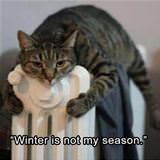 Winter Is Not My Season