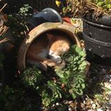 asleep in my pot