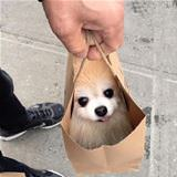 one bag of dog please