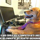 if a dog could use a computer