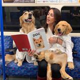 reading about dogs
