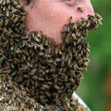 the bee man