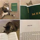 the meow book