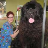 this is a big dog