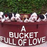 a bucket full of love