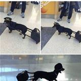 good boy airlines
